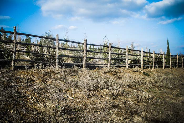 FENCES IN CHESTNUT WOOD
