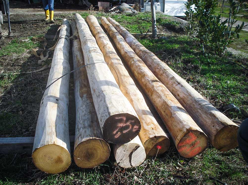 legno di abete
